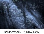 Magical Foggy Deep Forest With...