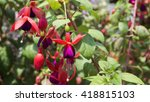 colorful flowers  in the... | Shutterstock . vector #418815103