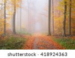 Mysterious Morning Fog In A...