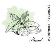 almond   vector illustration. | Shutterstock .eps vector #419288353