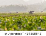 corn field  the cultivation of...   Shutterstock . vector #419365543