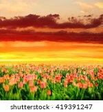 field of beautiful blooming... | Shutterstock . vector #419391247