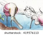 Roseate Spoonbills Two Roseate...