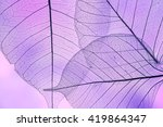 a leaf texture close up | Shutterstock . vector #419864347