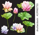 Set Of Lotus. Two Flowers With...