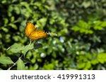 butterfly   Shutterstock . vector #419991313