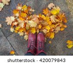 Maple Leaves Arranged In A...