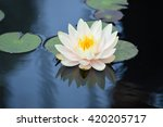 water lily | Shutterstock . vector #420205717