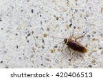cockroaches in the bathroom | Shutterstock . vector #420406513