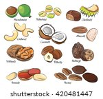 collection of different nuts | Shutterstock .eps vector #420481447