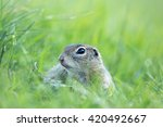 ground squirrel | Shutterstock . vector #420492667