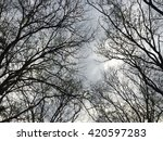 Looking Up At The Bare Trees...