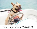 Stock photo behind the wheel of a high speed boat sits a dog french bulldog put his paws on the steering 420640627