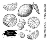 vector hand drawn lime or lemon ... | Shutterstock .eps vector #420753283