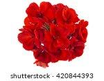 Red Garden Geranium Pelargoniu...