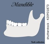 mandible   bite  closure of... | Shutterstock .eps vector #420931873