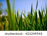 green grass and blue sky | Shutterstock . vector #421249543