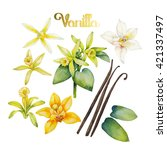 Watercolor Vanilla Flowers....