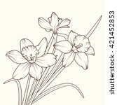 narcissus isolated brown on...