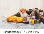 Stock photo red orange newborn kitten in a plaid blanket sweet adorable tiny kitten on a serenity blue wood 421456447
