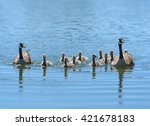 canada geese family with ten... | Shutterstock . vector #421678183