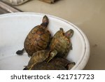Turtles At A Food Market In...
