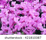 pink orchid background | Shutterstock . vector #421810387