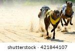 Greyhounds Racing