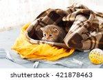 Grey Striped Newborn Kitten In...