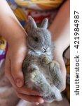 Small photo of Little grey bunny rabbit