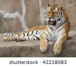 Tiger Relaxing On Rocky Ledge