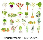 fruits and vegetables.... | Shutterstock .eps vector #422220997