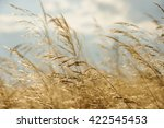 wind of change and a field of... | Shutterstock . vector #422545453