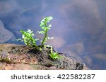 Small Trees Beside A Pond In...