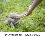 Feeding The Squirrels. A Young...