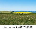 yellow mustard farm field with... | Shutterstock . vector #422831287
