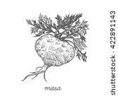 maca root. vector plant...   Shutterstock .eps vector #422891143