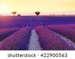 beautiful colors purple... | Shutterstock . vector #422900563