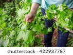 foraging for wild food. a woman ... | Shutterstock . vector #422937787