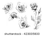 rose set. realistic pencil... | Shutterstock . vector #423035833