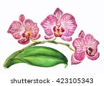 watercolor white and violet... | Shutterstock . vector #423105343