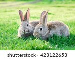 Image Of Two Grey Rabbits In...