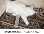 The Favourite White Cat Has ...