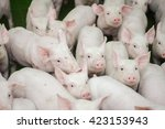 pig farm. little piglets | Shutterstock . vector #423153943