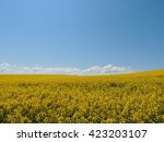 field of yellow rape with blue... | Shutterstock . vector #423203107