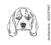 cute puppy. illustration for... | Shutterstock .eps vector #423257467