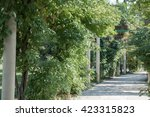park alley in the botanical... | Shutterstock . vector #423315823