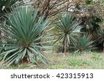 park alley in the botanical... | Shutterstock . vector #423315913
