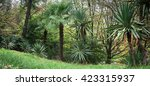 park alley in the botanical... | Shutterstock . vector #423315937