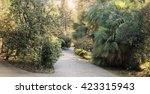 park alley in the botanical... | Shutterstock . vector #423315943